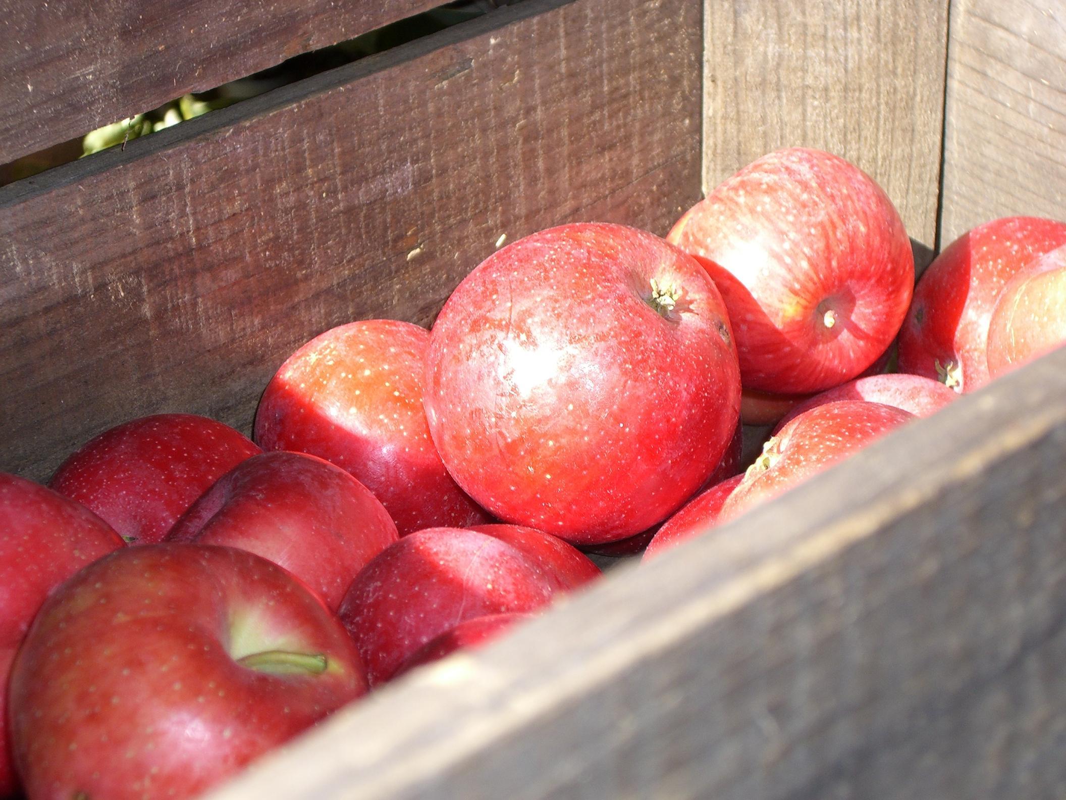 Julian apples