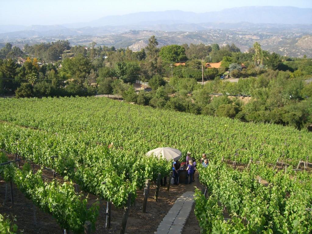 Wine Club Vineyard Walk